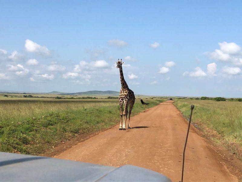 翌日、マサイの村に向けて出発。途中でキリンや像と遭遇し自然を感じながら向かいます。