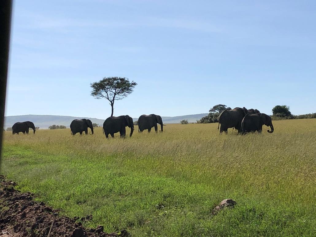ゾウの群れも至近距離で見ることができます。