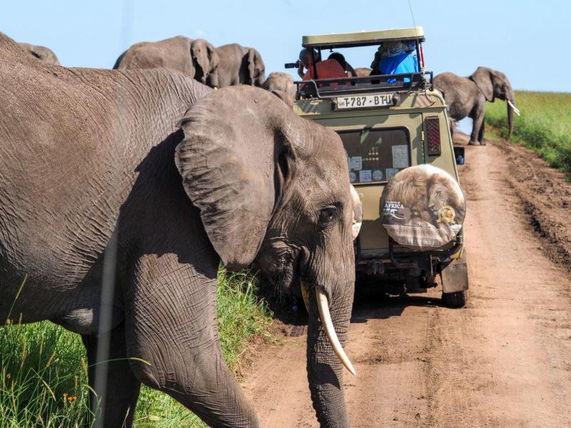 サファリに夢中になっていると、ゾウの家族に囲まれました。