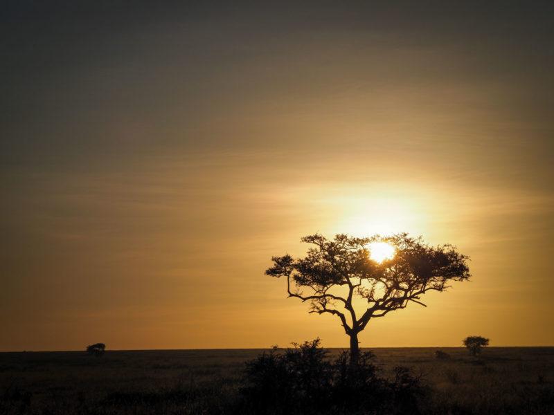 セレンゲティでお正月を迎えました。大草原の初日の出。