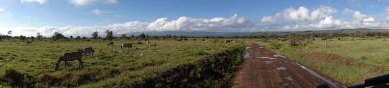 草食動物の楽園