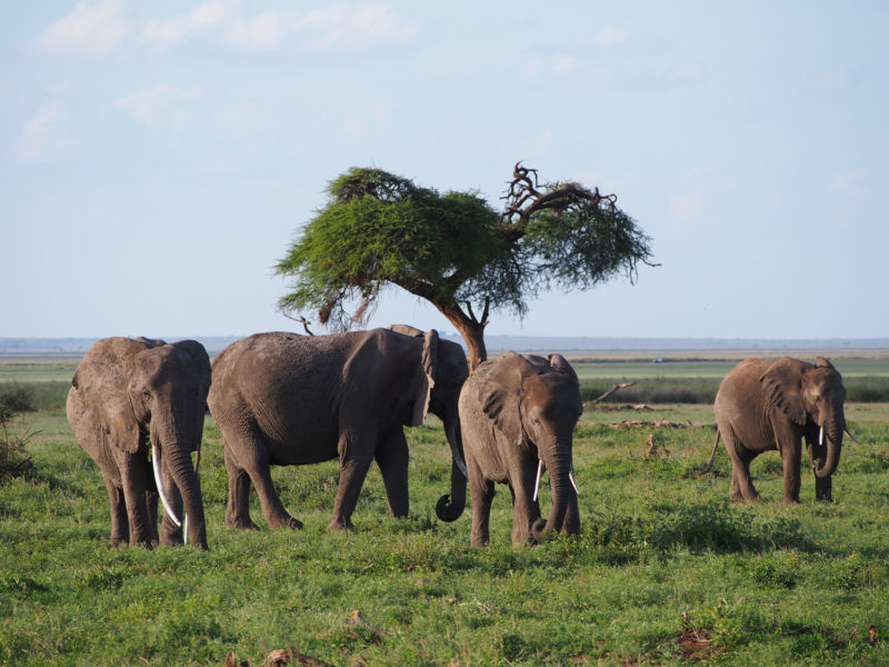 象の家族もお出迎え。