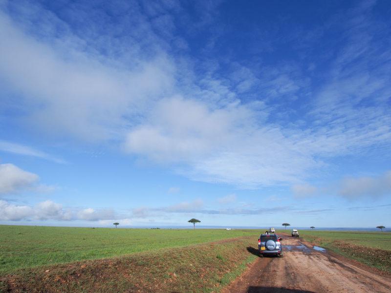 雨期のサバンナは美しい青い空と広大な緑の大地で彩られます。