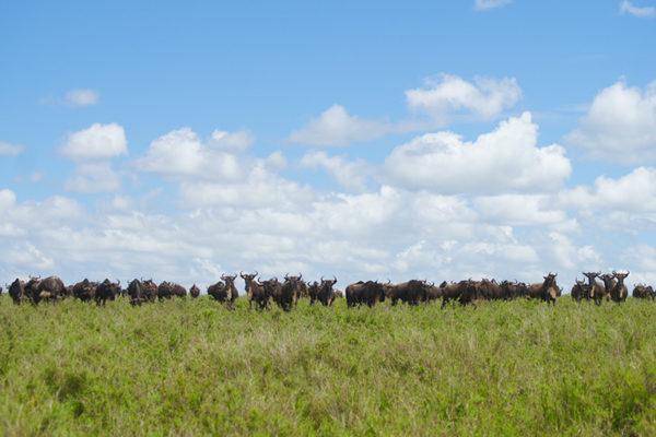 2019.11.15発 緑の季節のタンザニア 10日間