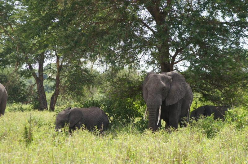 のそのそ…ゾウの親子の登場です。