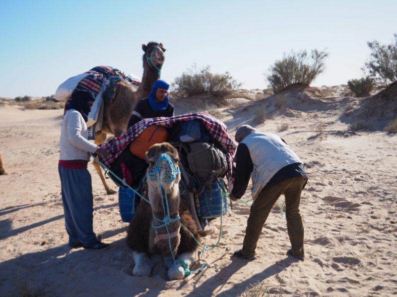 ラクダの背に自分たちの荷物を載せて運んでもらいます。