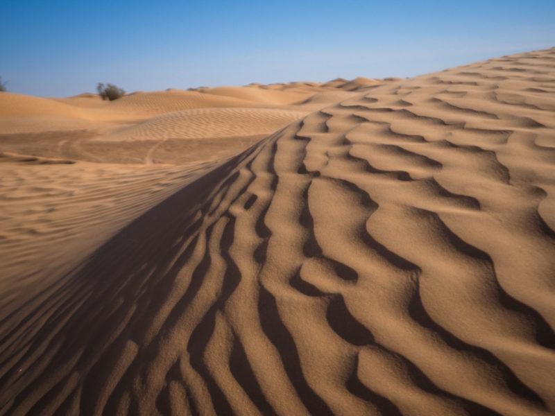 砂漠の景色も色々です。荒涼とした土獏地帯もあれば、風紋の美しい柔らかな砂丘も歩きます。