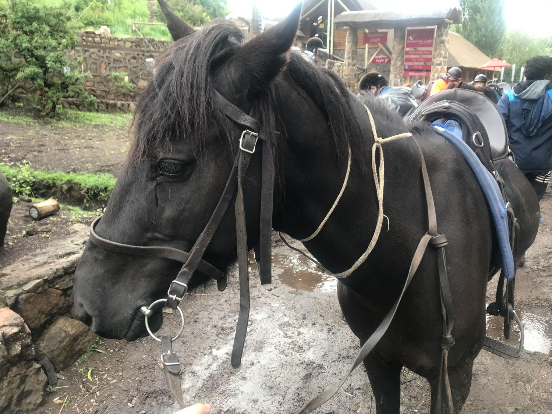 2泊3日お世話になる馬のポロレ。遊ぶの大好き元気な子でした。