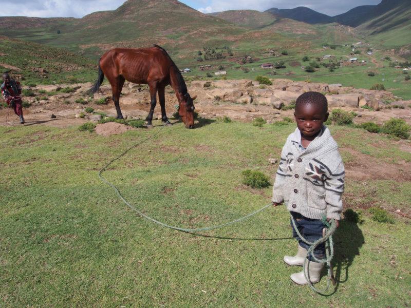 こんなに小さくても馬のお世話のお手伝いをします。