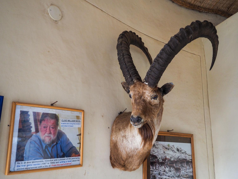 ユネスコの世界遺産にも登録されているシミエン国立公園。初代管理人のC.W.ニコルさんと固有生物のワリア・アイベックスの剥製