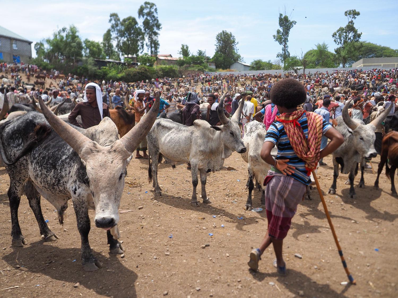 家畜の売り買いに集まる人々