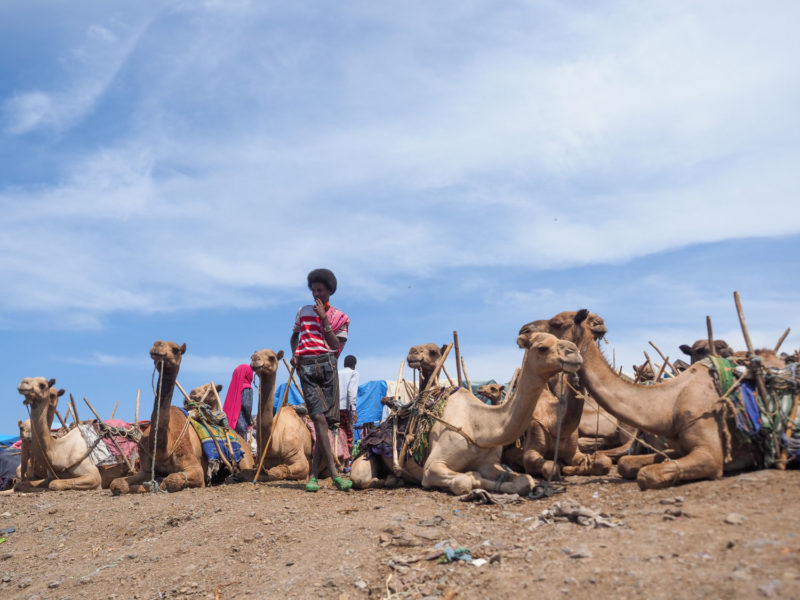 ラクダを売る人は、アフロ頭が特徴的なアファールの人々が多い