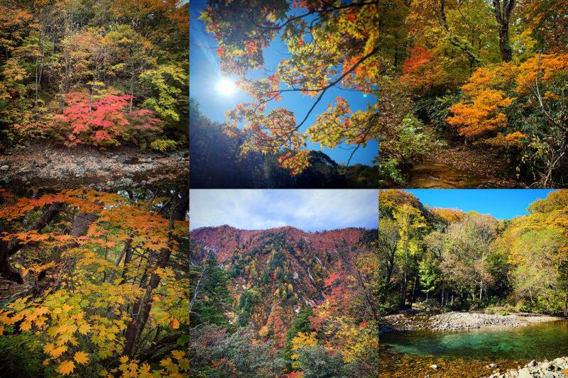 山の斜面を彩る見事な紅葉