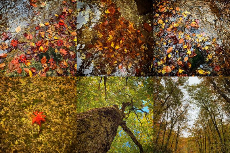 紅葉も、視点によって様々な見る楽しみがあります