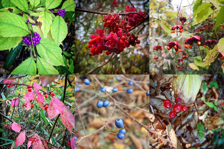 カラフルな森の果実たち