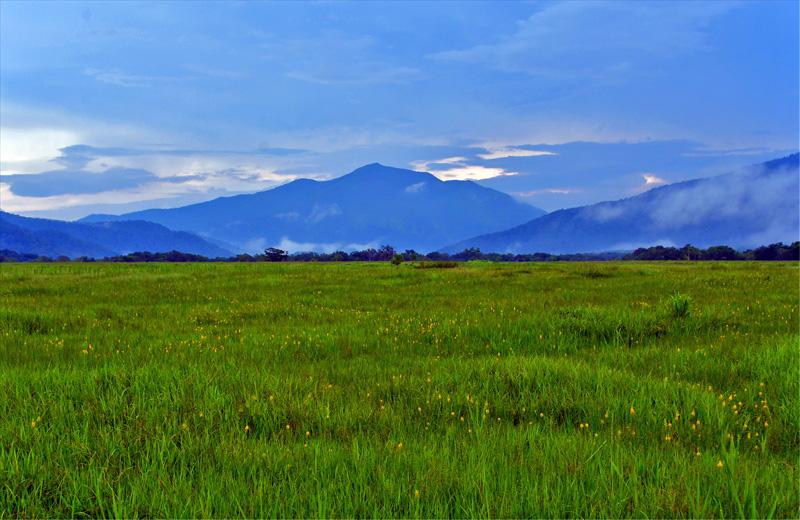 キンコウカの群落と至仏山 雨が上がり暮色がかった至仏山が見られる