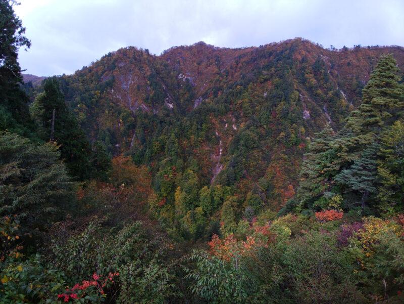 一週間で紅葉もだいぶ進みました